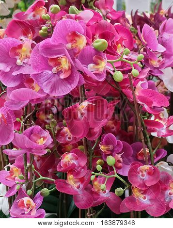 Flower and Plant Bunch of Purple and Pink Artificial Phalaenopsis or Orchid Flower Streak for Home and Building Decoration.