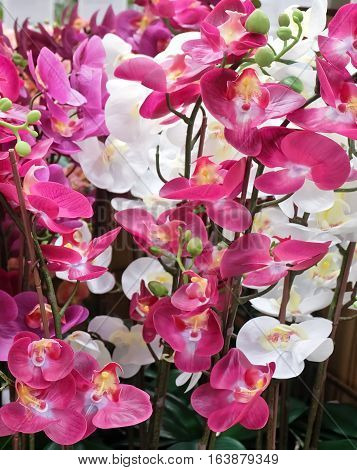 Flower and Plant Bunch of White and Pink Artificial Phalaenopsis or Orchid Flower Streak for Home and Building Decoration.