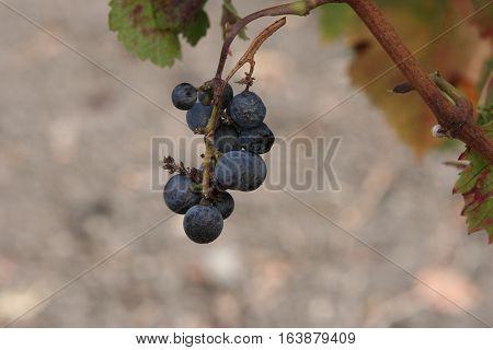 Vineyard in San Fran with lots of land