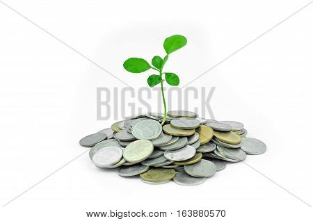 Planted a tree on the coinin in white background.