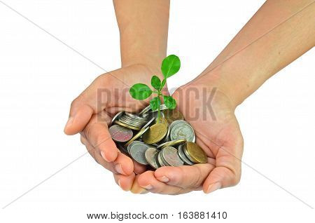 Place a coin in the hand and planted a tree on the coin.