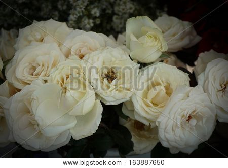 White rose bouquet photo taken in Semarang Indonesia java