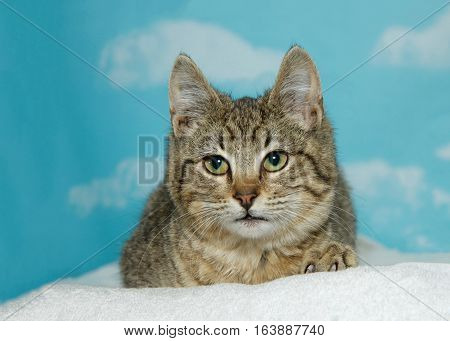 Portrait of a brown and black tabby kitten laying on a white blanket looking to viewers left. Blue sky background with clouds