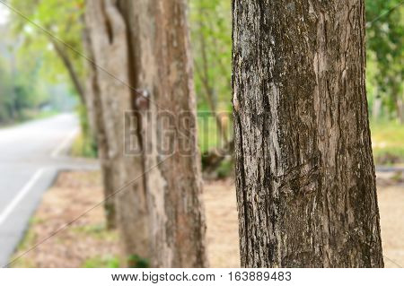 Texture of the tree near roadside with nature background,use for backdrop or web design
