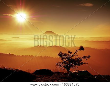 Cold Golden Spring Daybreak. Snow On Ground. Peaks Of Forest