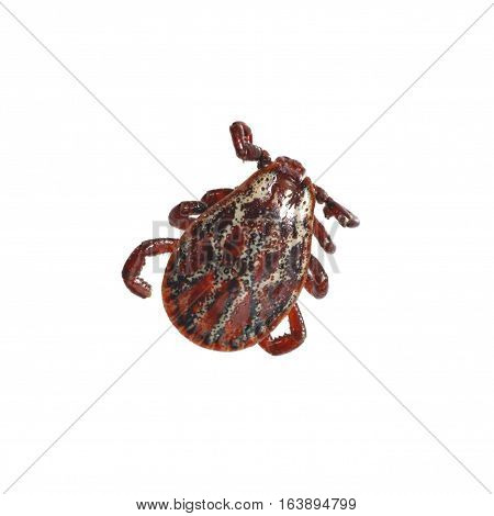 Red Spotted Mite
