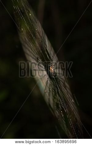 In The Middle Of The Web