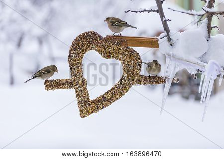 winter season and problem of hunger; wild birds love the creative concept