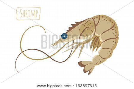 Beige shrimp with long whiskers vector  illustration cartoon style