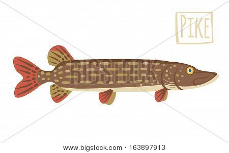 Pike, vector cartoon illustration, brown and red