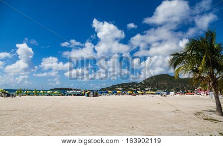 Palm Tree on St Maarten Beach under Nice Sky