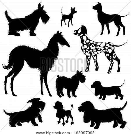 Set of of dogs silhouettes - scottish terrier dalmatian dachshund poodle chihuahua. Isolated on white background.