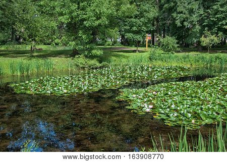 Saint-Petersburg, Russia, August 3, 2016: Pond with lotus flowers in Peter the Great Botanical Garden (Botanic Gardens of the Komarov Botanical Institute of the Russian Academy of Sciences.