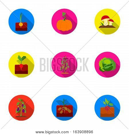 Plant set icons in flat style. Big collection of plant vector symbol stock