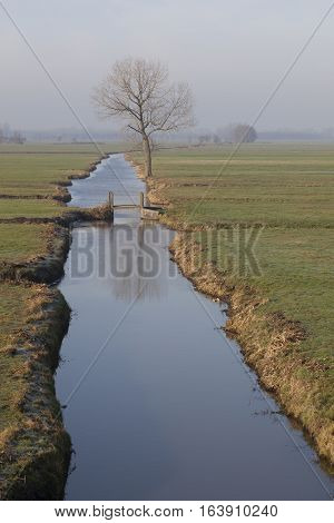 tree and bridge in meadow landscape in the netherlands near Meerkerk in South Holland