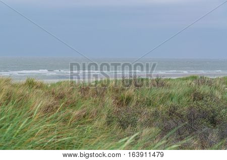 Sea grass and dunes. In the background the stormy North Sea in Holland.