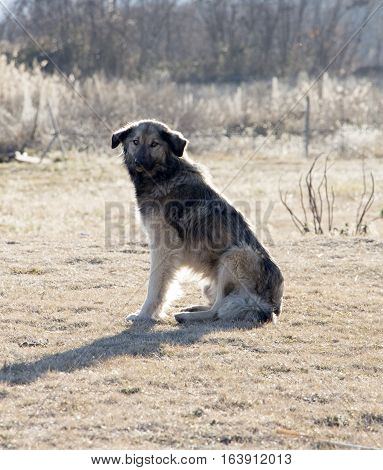 Lonely stray dog sitting, picture of a