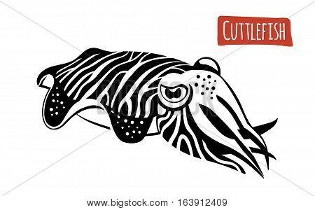 Cuttlefish, black and white vector illustration, cartoon style