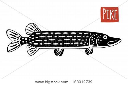 Pike, black and white vector illustration, cartoon style