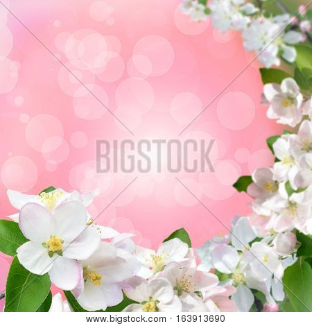 apple-tree flowers close-up on a tender blurred background with bokeh. Spring background. Concept regeneration nature.