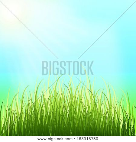 Tender young grass reach for the sun. Bright blue spring sky. Spring background. Summer. Warmly. Nature.