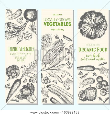 Set of banners with hand-drawn vegetables. Vector illustration for vegetables market. Vertical banner collection. Vintage elements for design.