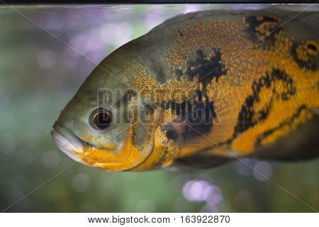 Aquarium Fish Photo