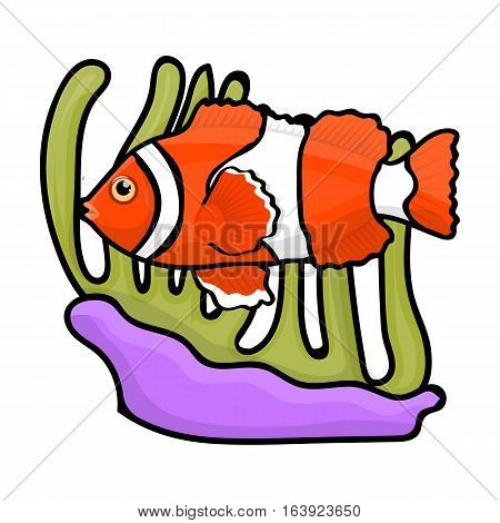 Clownfish and anemone icon in cartoon design isolated on white background. Australia symbol stock vector illustration.