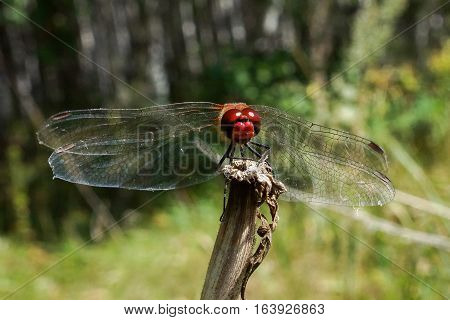 The photo shows a dragonfly on a stick