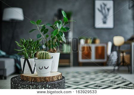 Decorative Green Houseplant In Pot