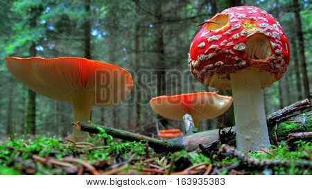 beautiful picture of nature with mushrooms. pure color of the fungus. a fungus can be amazing. a fungus enlarged enough to be amazing