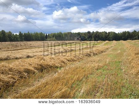 Beautiful landscape with grain rotary agricultural machine harvests on field in sunny summer day.