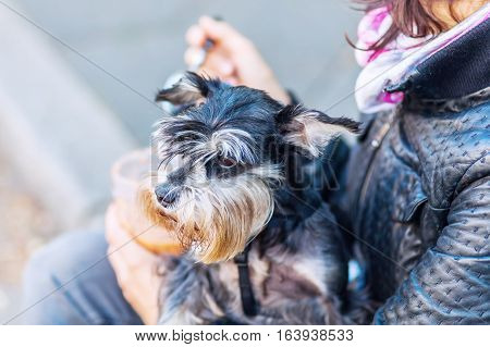 woman holds a dog in the arm while she is eating