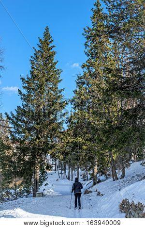 Winter in High Tatras Mountains. High Tatry. Slovakia. Vysoke Tatry. Sunny day. Cross Country Skiing.