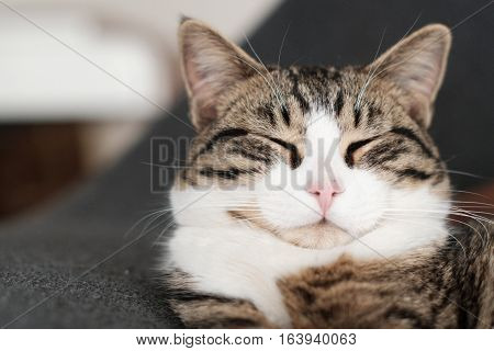 Portrait of a black and white cat sleeping with copy space