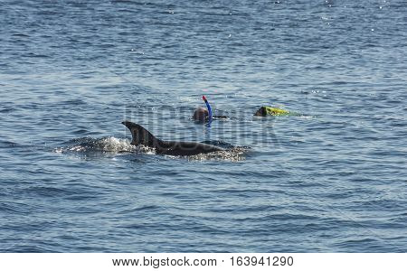 Snorkelers With Dolphin In Tropical Sea