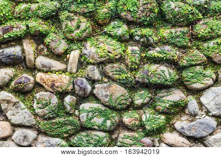 vintage stone wall covered with lichen for background