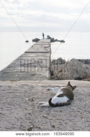 Cat And Two Men Fishing