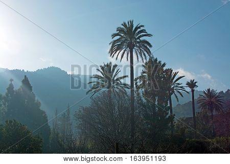 Mallorca Winter Landscape