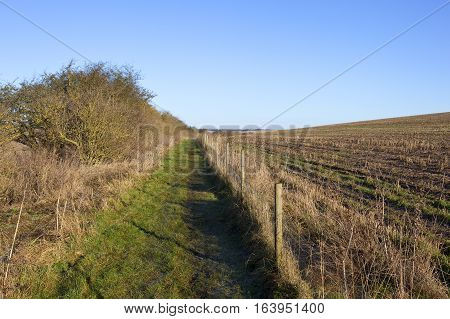 Bridleway And Hedgerow