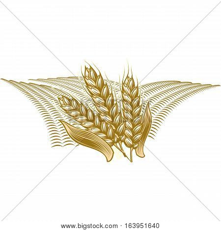 Farmers market badge with ripe wheat cereals. Monochrome vintage engraving fresh organic bread ear spica sign icon isolated on white background.