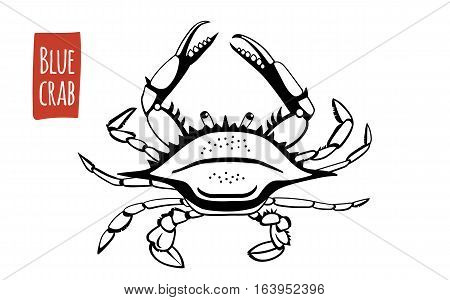 Blue Crab, black and white vector illustration, cartoon style