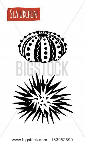 Sea Urchin, black and white vector illustration, cartoon style