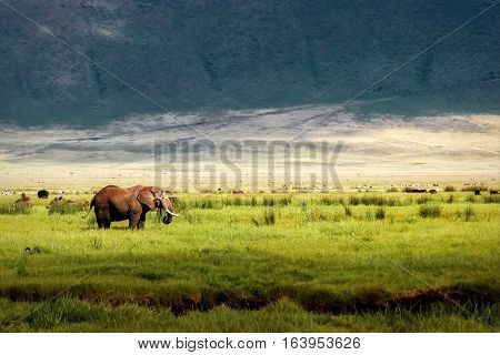 African elephant in the Ngorongoro crater in the background of mountains