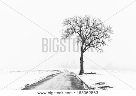 Lone Tree Along Road in Snow Storm