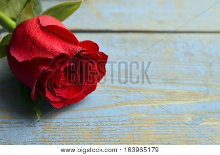 Rose on blue wooden background for Valentine's Day with copy space.Valentine rose.St.Valentines Day,14 february concept.Selective focus.
