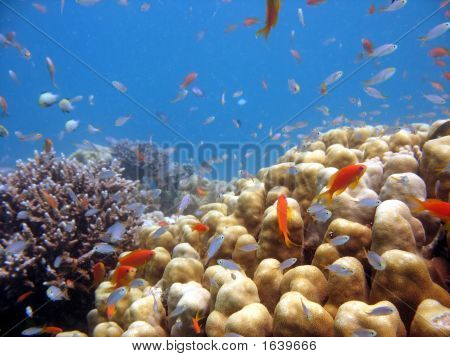 A beautiful picture of a coral reef teeming with life. shot in the Red Sea poster