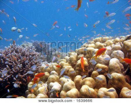 Coral Scene
