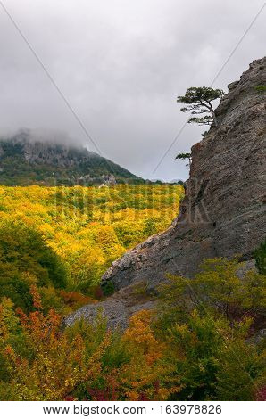 Lonely tree growing on the edge of the mountain on Demerji, Crimea