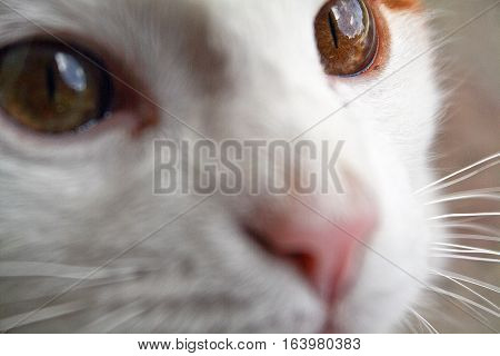 The look of the cat. Cat's eyes close up